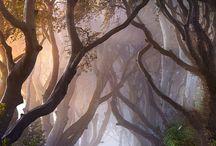 les, cesty , brány,  voda..