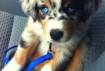Dogdom: Made to order. / Intentional cross breeding. / by Edna Lötter Botha