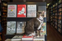 book store cats