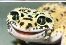 Reptile Cuties