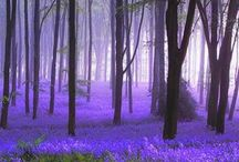 bluebells and snowdrops