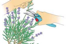 Pflanzen durch Stecklinge vermehren