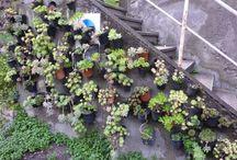 Vertical garden-giardino verticale-piante grasse / Idea facile e veloce per realizzare una parete verticale di succulente