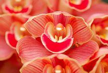 Orkideler...
