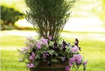 Landscaping Ideas / by Maghan Hunt