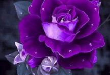 purple my  favorite  colour