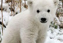 Cuties / Polar bears