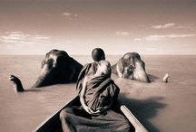 Gregory Colbert / by Kara Stans