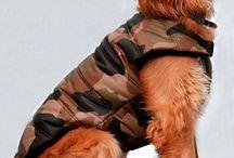 Köpek Kıyafetleri / Köpek Kıyafetleri