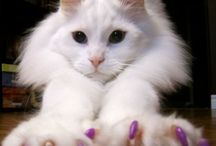 kijk eens naar mijn nageltjes