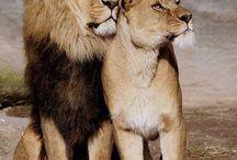 Los reyes...