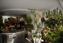 Kwiaciarnia Zielona Gęś / Zapraszam do mojego świata...  Rośliny, piękne kwiaty, nastrój, wolność, wspaniały zespół! www.zielonages.com.pl
