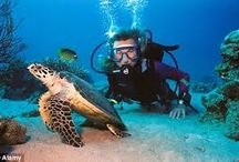 St. Thomas diving / Submerge yourself into the Caribbean. For details visit http://coralworldvi.com/