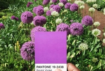 ✻ | pantone projects