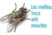 pièges à mouches