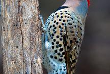 Bird Beauty!