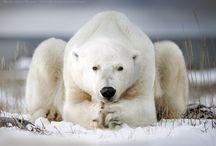 Animal Photo Favorites / Animal photo favorites.