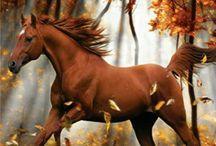 horses / welk paard is jouw favoriet?