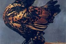 Poultry / Poultry breeds