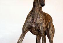 Galgo/ greyhound