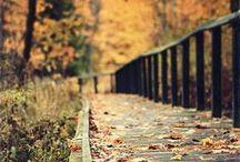Fall / 0