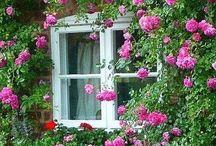 Virágos ablakok