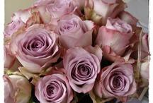 Flowers & Hues