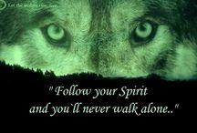 wolf my favt