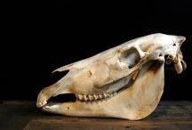 Skulls, Antlers and Skeletons / We have a large range of skulls and skeletons.