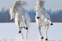 Paardenpics