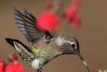 Beautiful Birds of the Pacific Northwest / as seen through the eyes of an amazing photographer Doug Parrott of www.imagesbyDougParrott.Etsy.com