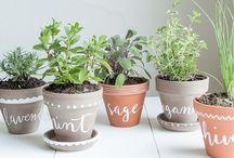 Gardening & Hobbies