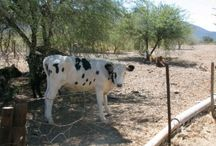 Northern Cape Farms / Farms for sale in the Northern Cape of South Africa