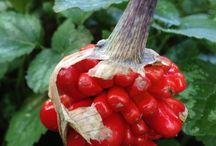 Botanical photos