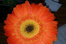 Flowers / recorriendo  jardines