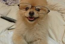 Professor Sammy