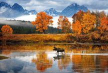 Les 4 saisons / Au fil des saisons, la nature change d'habits ...