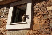 Aldeias do Xisto | Schist Villages