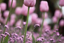 garden  / by Elina Paulk