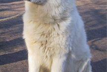 hond die ik wil hebben