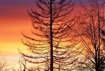 Nature's Favorite Colors