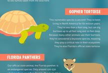 Kissimmee Infographics