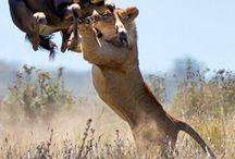 hunting & wildlife