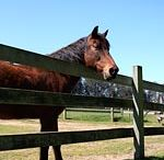 Morgan Horse Ranch / by Point Reyes National Seashore Association