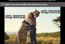 zwierzątka