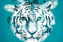 Lions & Tiger <3