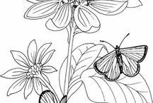 Zeichenvorlagen Schmetterlinge
