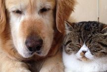 Cats❤️Dogs
