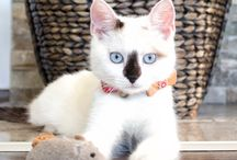 Christmas cat / This is our red Christmas cat collar with safety breakaway, wooden bow tie and a friendship bracelet for you. Perfect gift for all cat owners.
