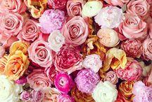 {Posey} Flowers